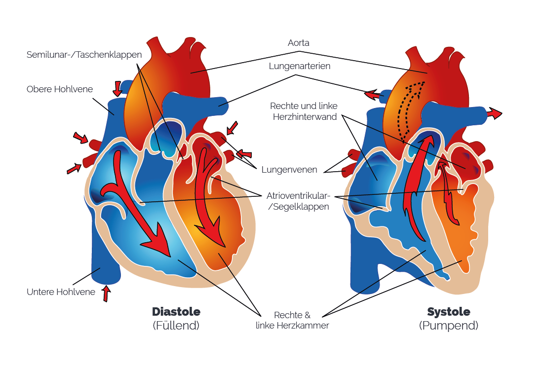Blutdruck (Systolischer und Diastolischer Druck)